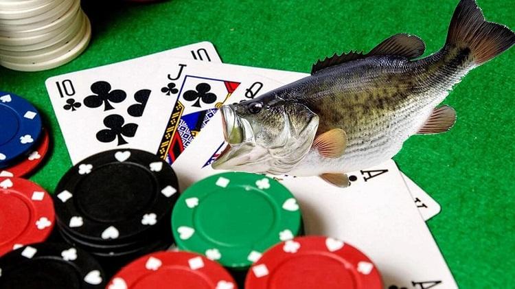 Ikan Poker